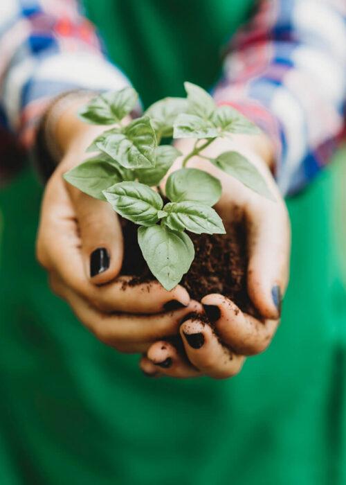 Dłonie trzymające zieloną roślinkę